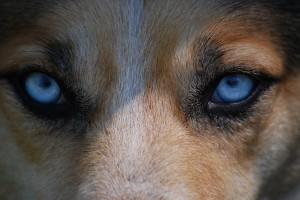 eyes-712125_640